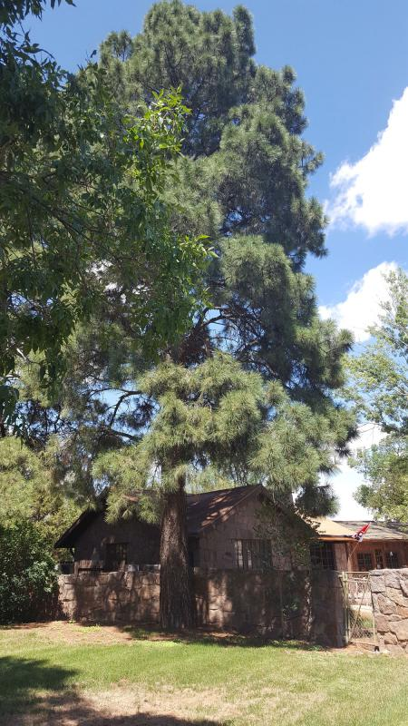 New Mexico Statewide Forestry Plan Large Pine