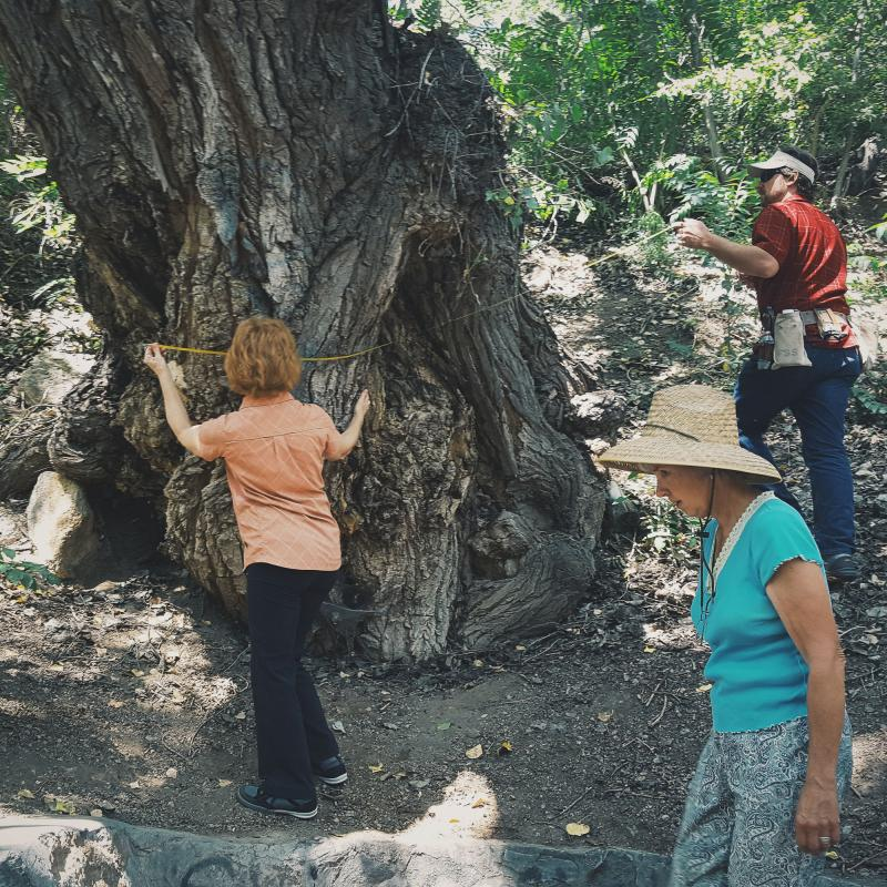 New Mexico Statewide Forestry Plan Trunk Measuring