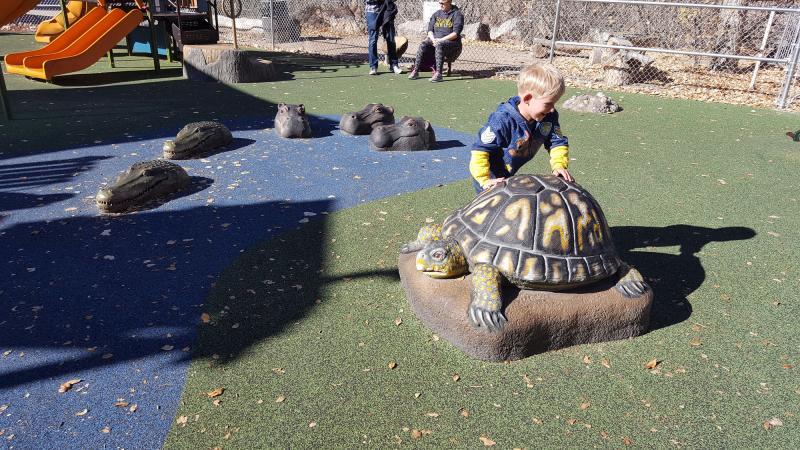 Albuquerque BioPark Zoo Playground Turtle